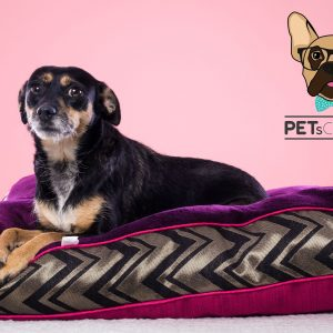 DOG BEDS | CAMAS