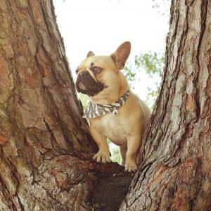BANDANAS | DOG SCARF