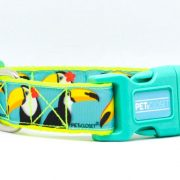 dog collar tucano fluo