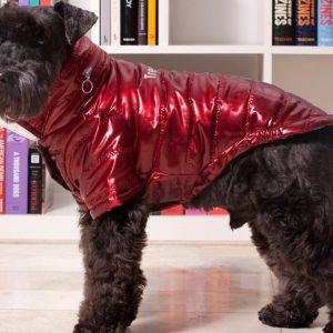 roupa para pet roupa para cão