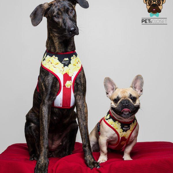 kiara e stewie sweet popcorn dog harness peitoral