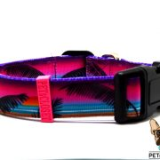 sunset coleira dog collar
