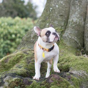 DOG COLLARS | COLEIRAS